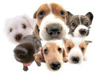 małe psy - spójrz na mnie!